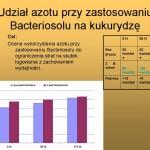 Udział azotu przy zastosowaniu Bacteriosolu na kukurydzę