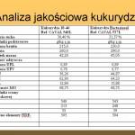 Analiza jakościowa kukurydzy